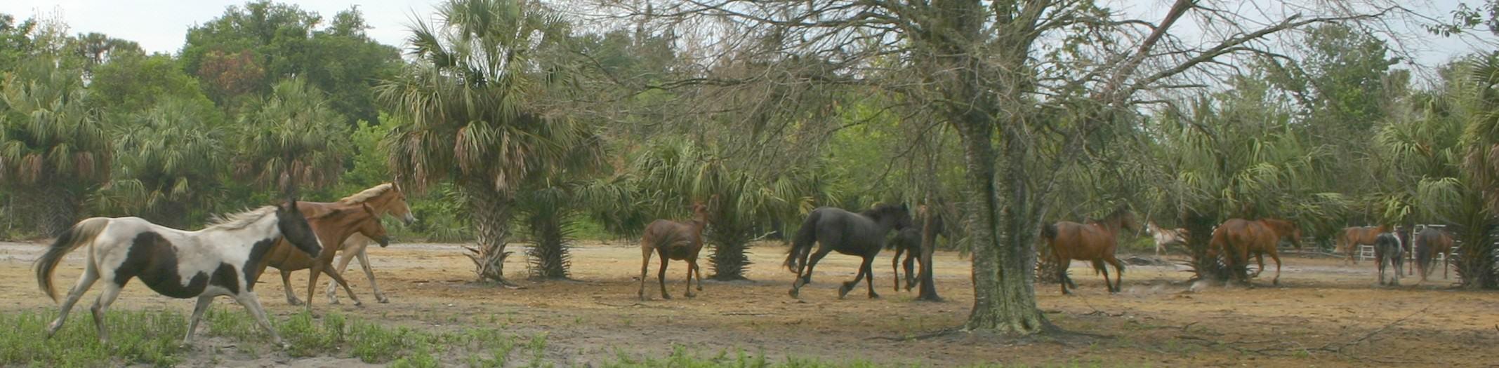 Horseback Hourly Rental | Suncitystables com: Florida Trail